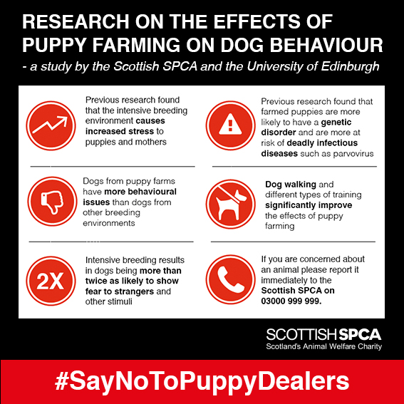 Puppy farming infographic