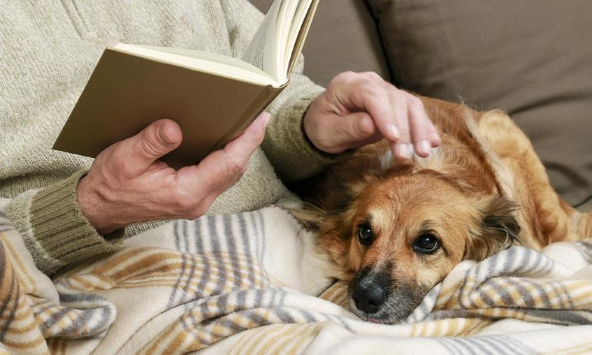 Elderly person stroking dog